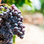 Night Tours Malta - Wine Tour and Excursions