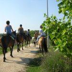 Malta Family Activities - Horse Riding Malta