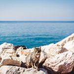 Cats in Malta - Discover Hidden Places in Malta